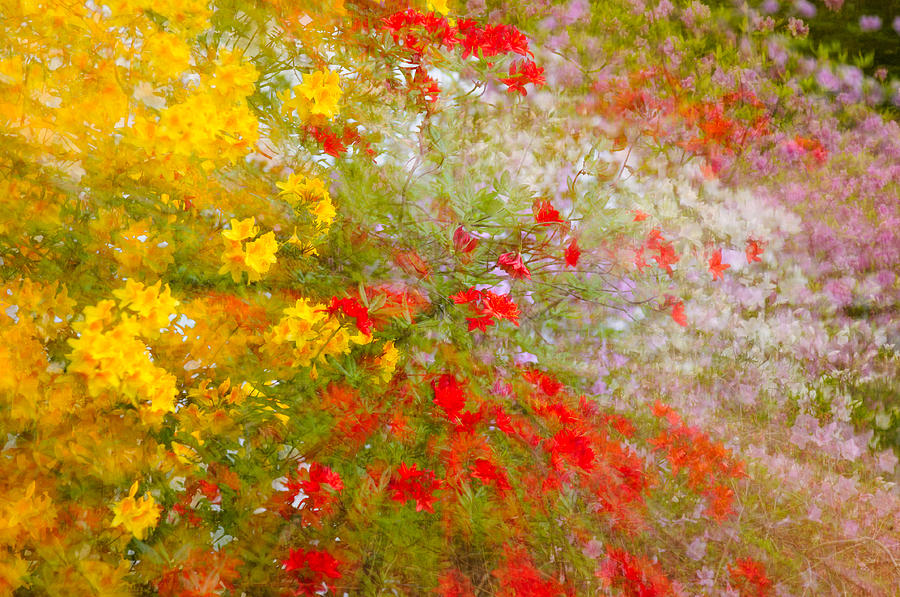 Painterly Photograph - May Impression by Bobbie Climer