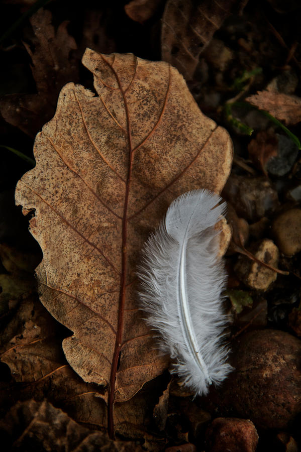 Leaf Photograph - May To October by Odd Jeppesen