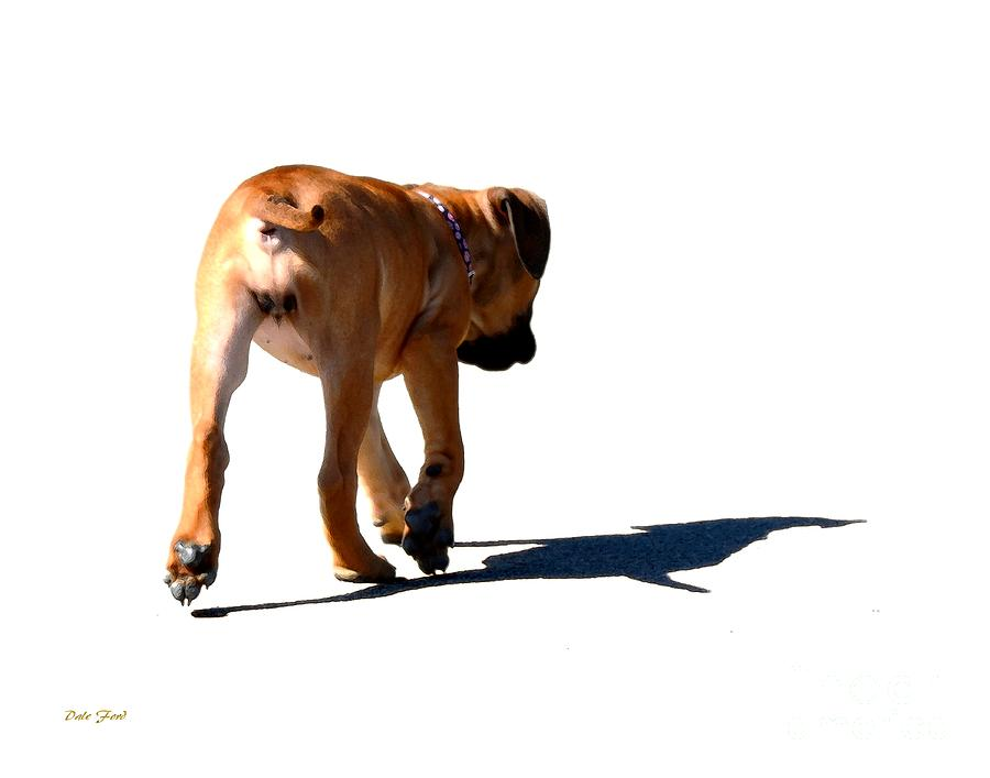 Dog Digital Art - Me And My Shadow by Dale   Ford