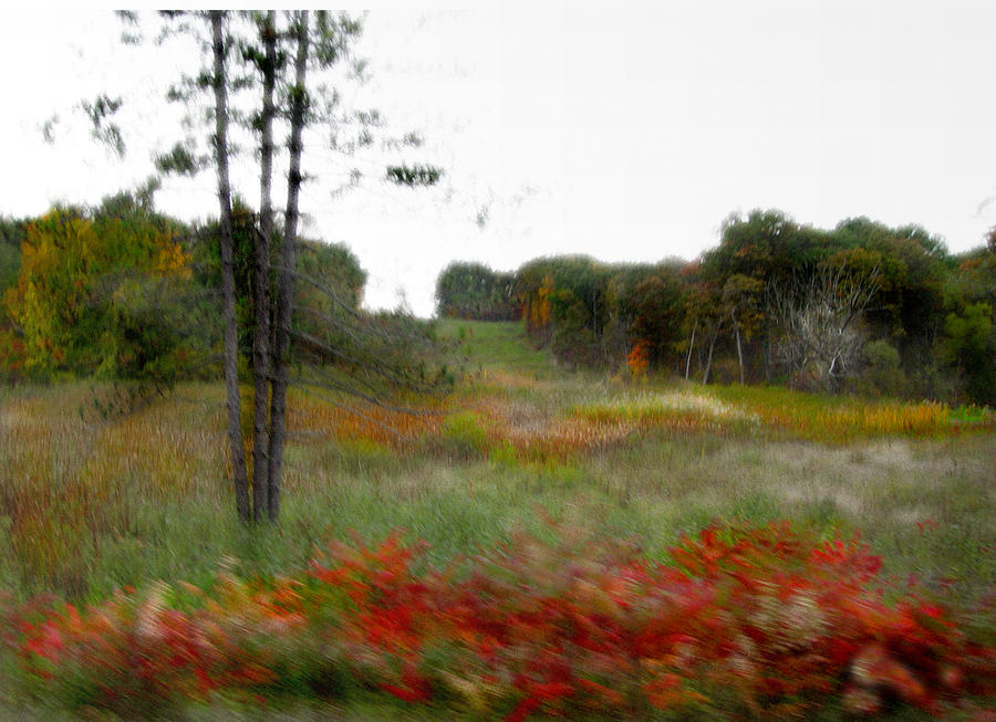 Meadow by Marilyn Marchant