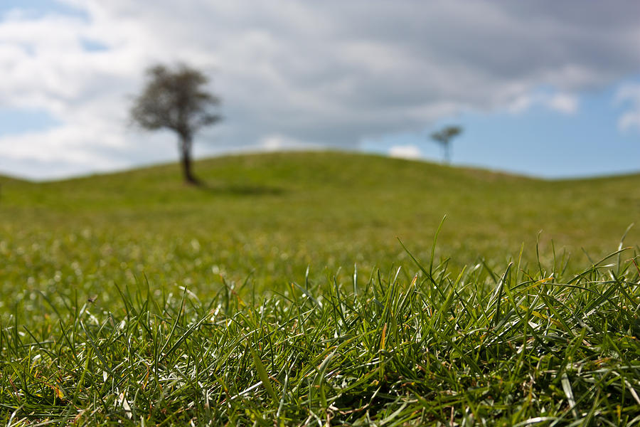 Beauty Photograph - Meadow by Semmick Photo