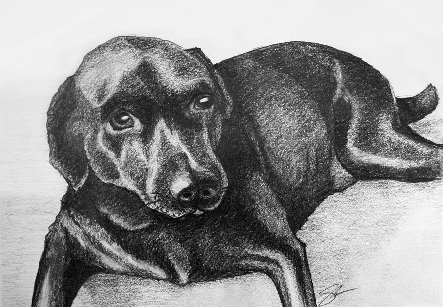 Dog Drawing - Meadow by Sara Coolidge