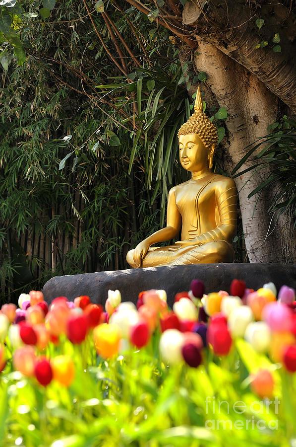 Meditation Buddha Statue In Tulips Garden Under The Bodhi