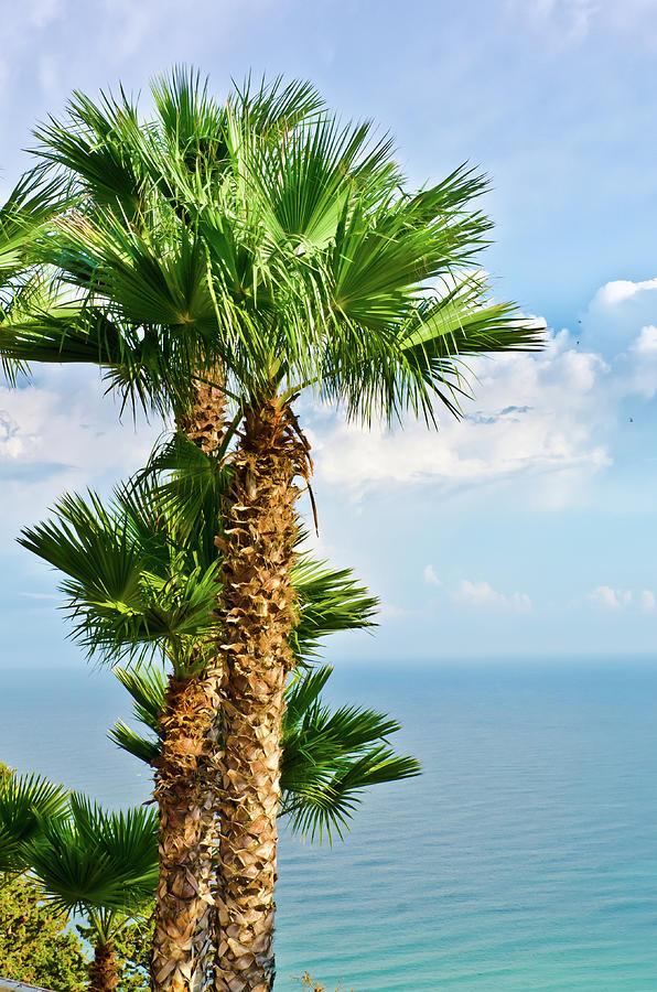 Landscape Photograph - Mediterranean landscape by Michael Goyberg
