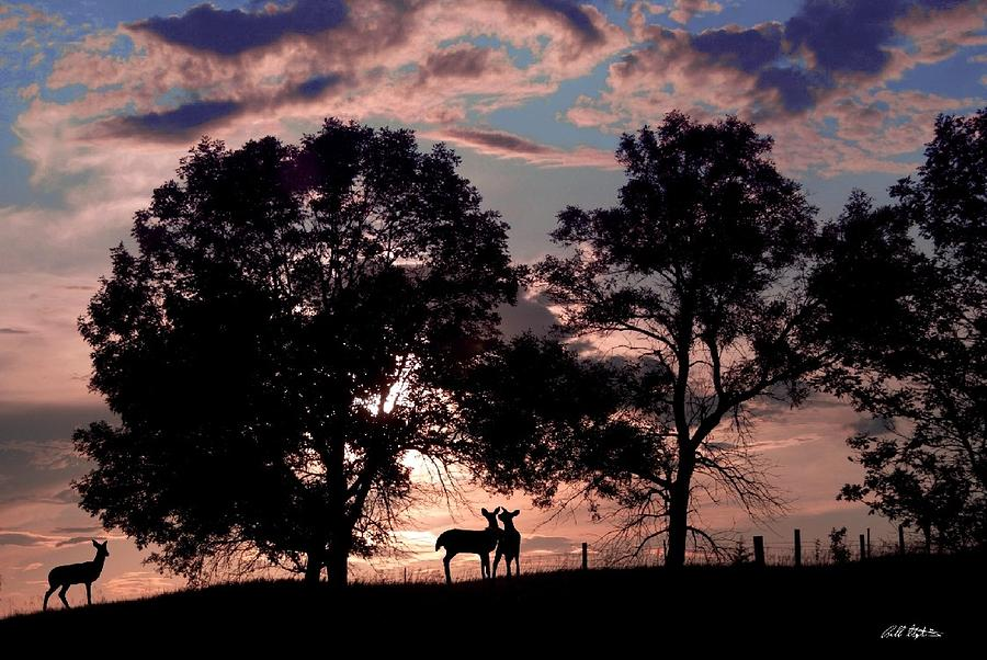 Deer Photograph - Meeting In The Sunset by Bill Stephens