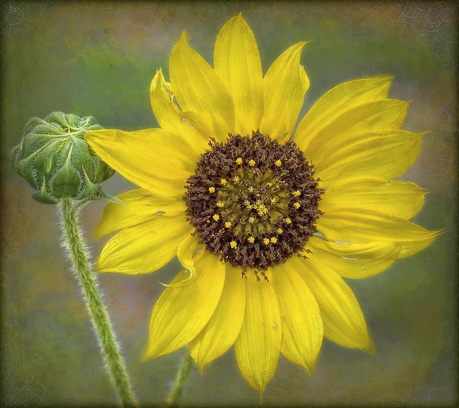 Flower Digital Art - Mellow Yellow by Hazel Billingsley