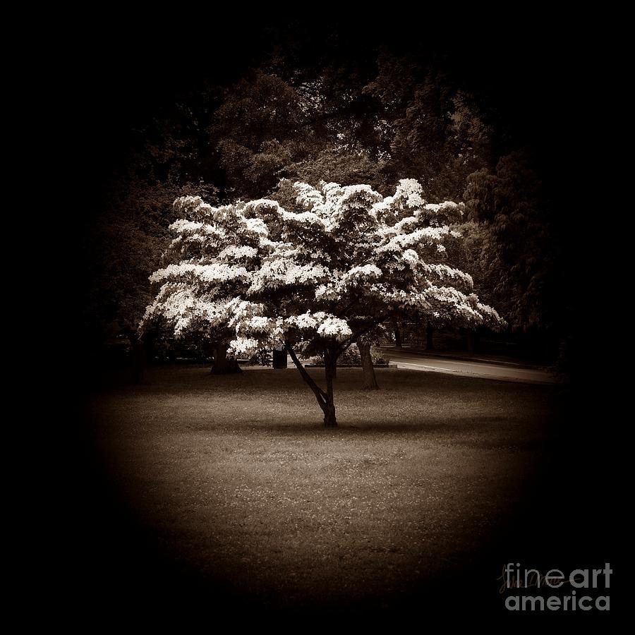 Memoir Photograph - Memoir 1 by Luke Moore