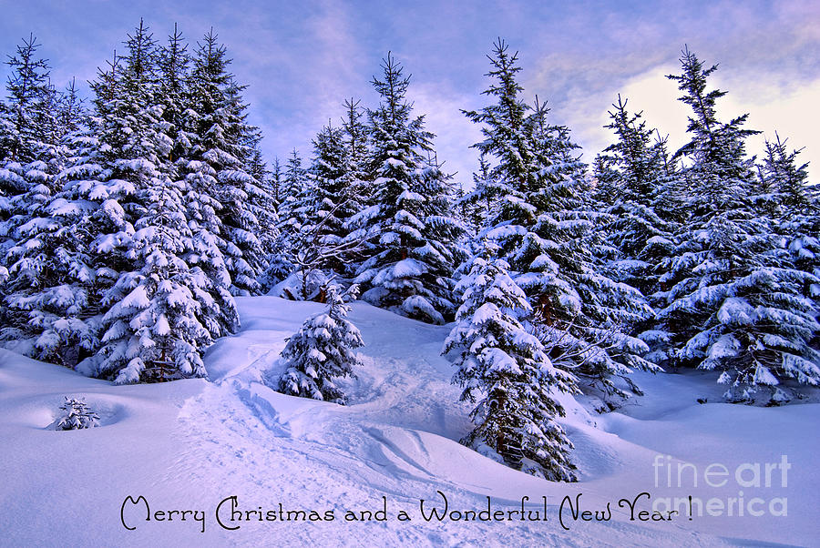 Winter Photograph - Merry Christmas And A Wonderful New Year by Sabine Jacobs