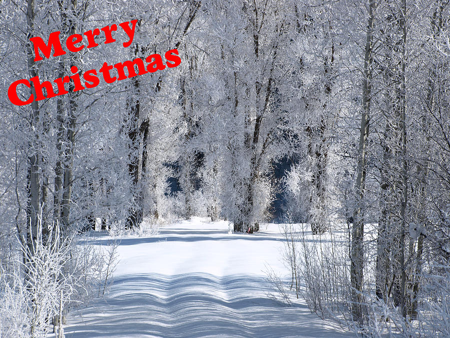 Christmas Photograph - Merry Christmas Card 1 by DeeLon Merritt