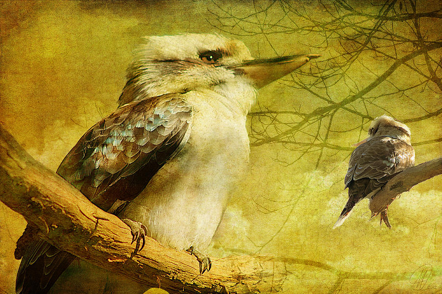 Kookaburra Digital Art - Merry Merry King Of The Bush  by Margaret Hormann Bfa