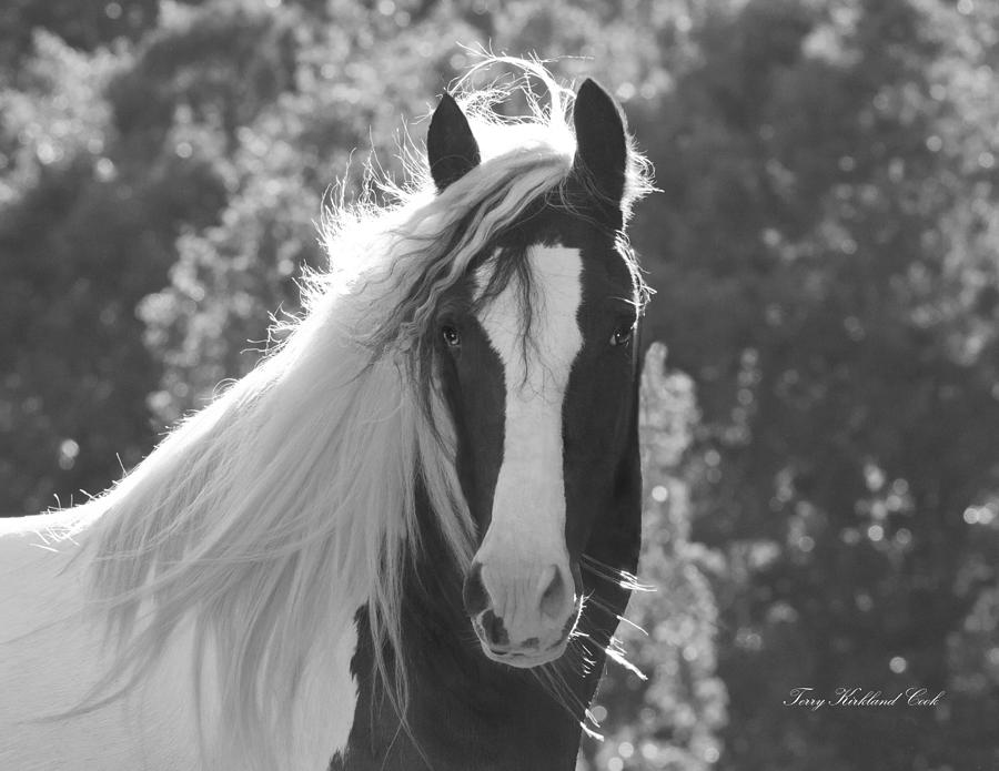 Equine Photograph - Mesmerizing Eyes by Terry Kirkland Cook