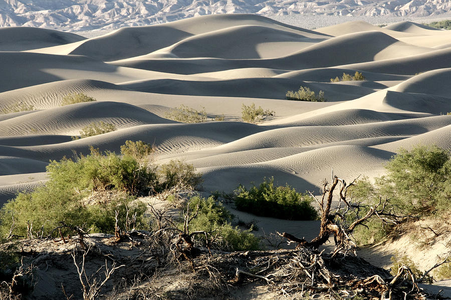 Mesquite Sand Dunes Photograph - Mesquite Sand Dunes by Wes and Dotty Weber