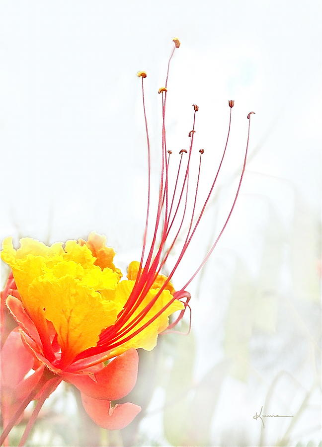 Floral Photograph - Mexican Bird Of Paradise by Kume Bryant