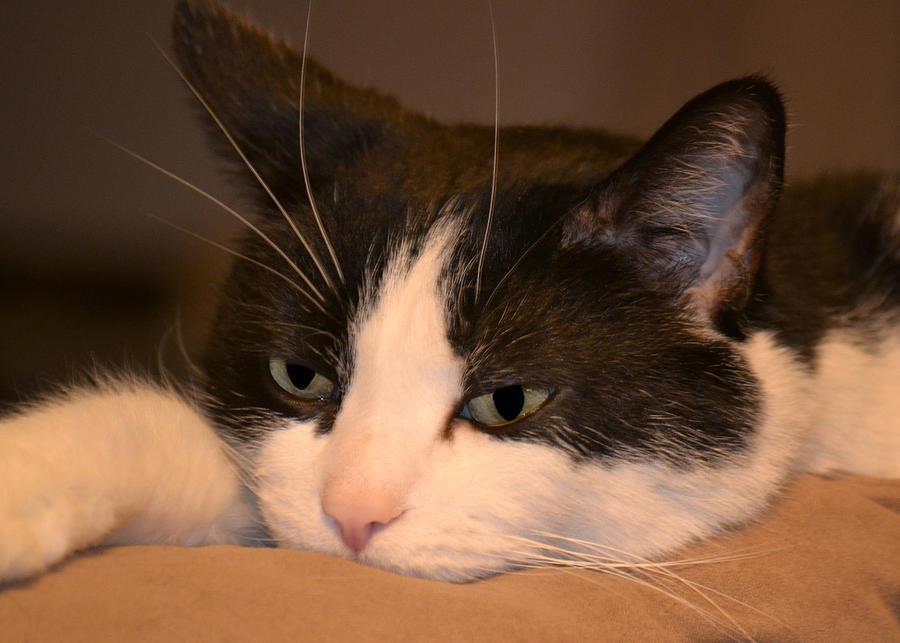 Cat Photograph - Miami by Christina Davis
