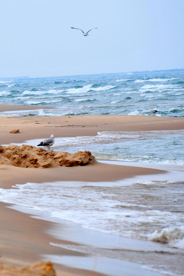 Michigan Photograph - Michigan Seashore by Tina Karle