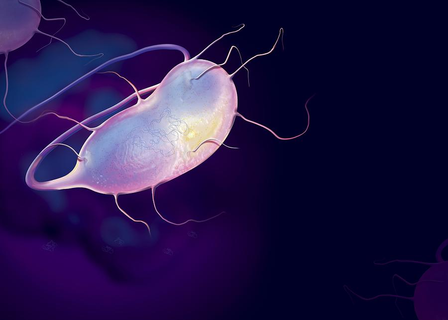 Bacteria Photograph - Microbes, Conceptual Artwork by Claus Lunau