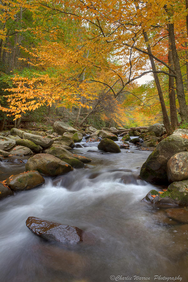 Great Smoky Mountains Photograph - Mid Stream II by Charles Warren
