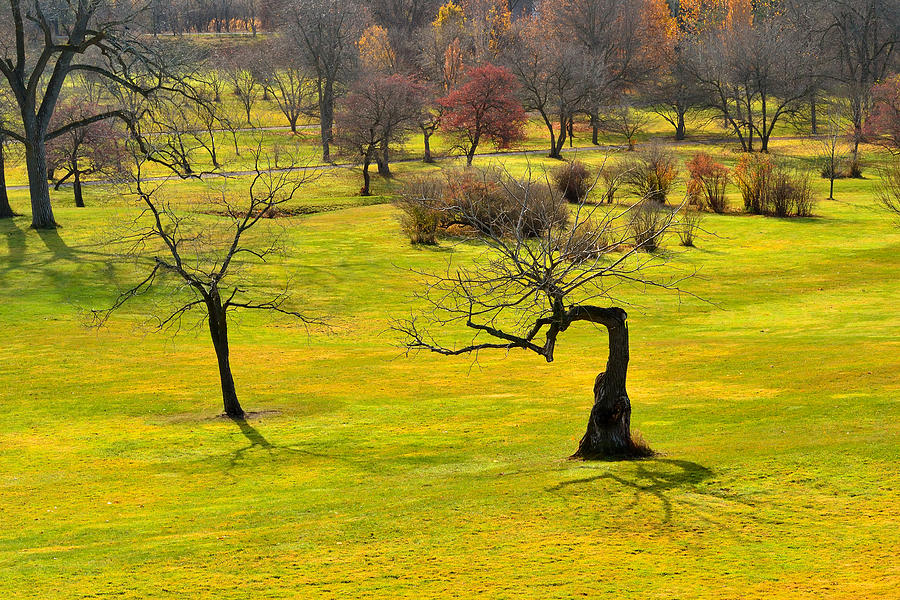 Trees Photograph - Middle Earth by Joshua McCullough