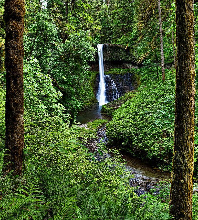Green Photograph - Middle North Falls by David Wynia