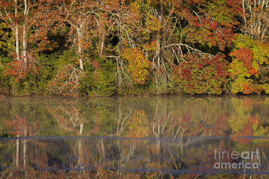 Mill Pond fall colors by Gene  Marchand