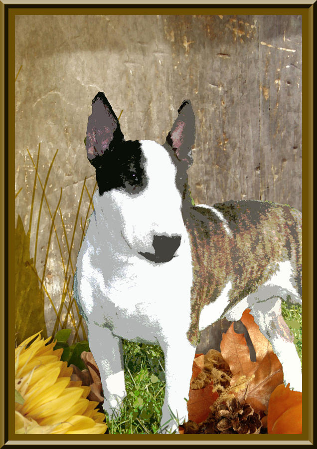Animal Digital Art - Minature Bull Terrier by One Rude Dawg Orcutt