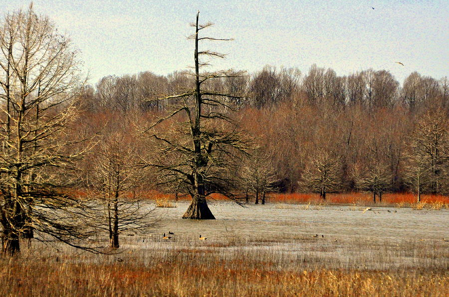 Swamp Photograph - Mingo Swamp 1 by Marty Koch