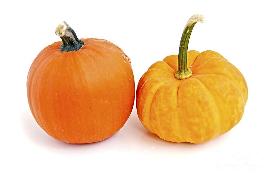 Pumpkin Photograph - Mini Pumpkins by Elena Elisseeva