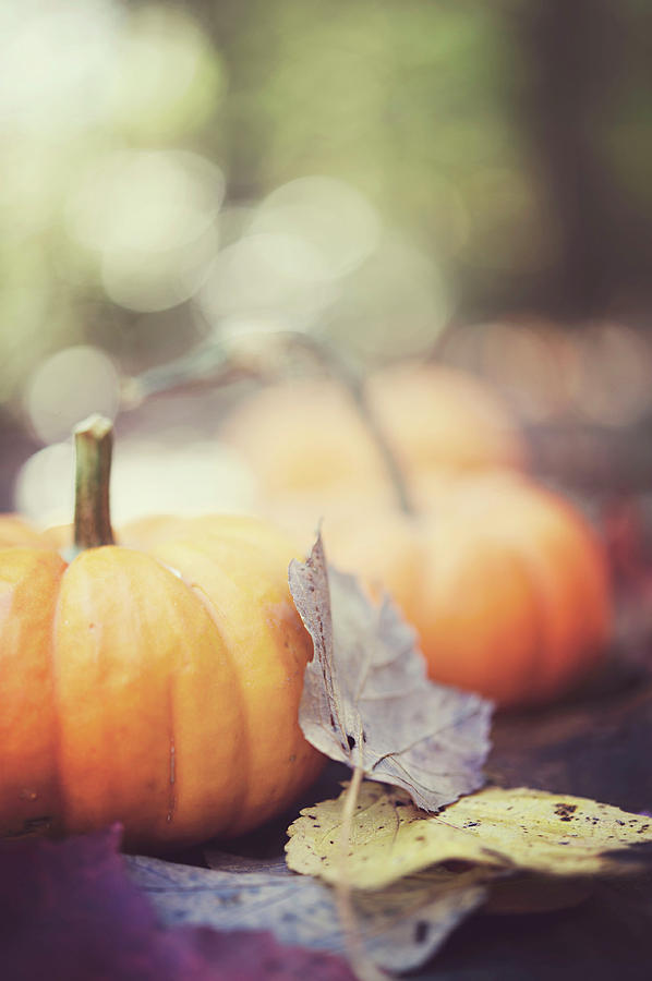 Vertical Photograph - Mini Pumpkins With Leaves by Samantha Wesselhoft Photography