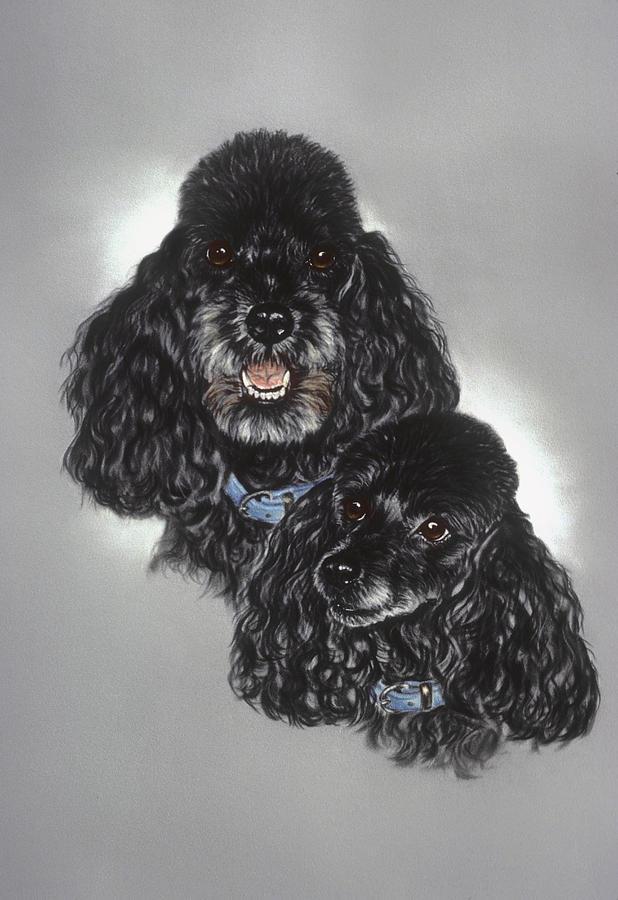 Miniature Poodles Pastel - Miniature Poodles by Patricia Ivy