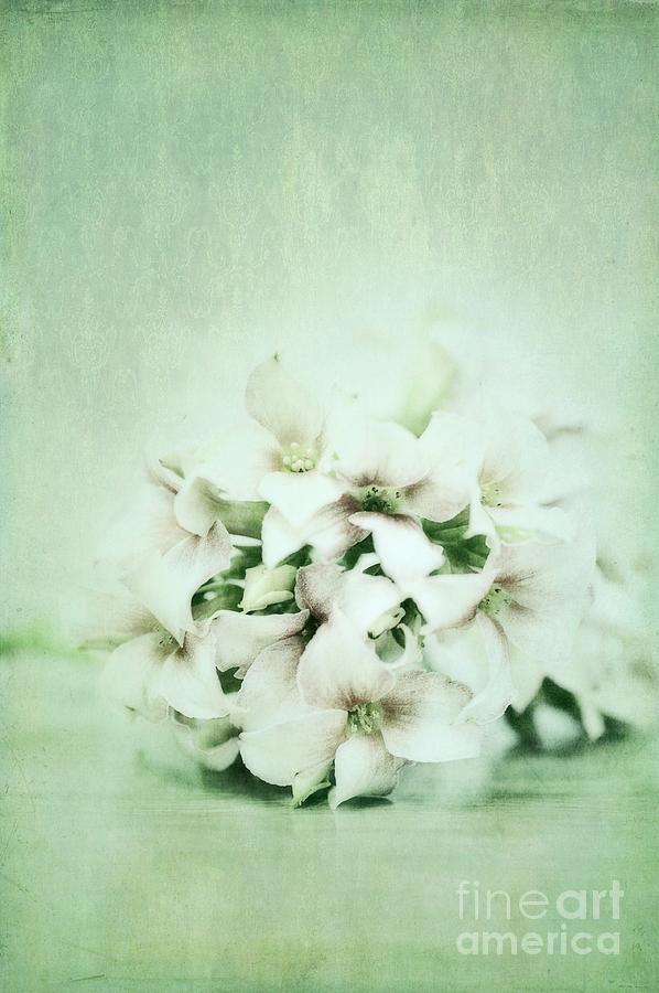 Kalanchoe Photograph - Mint Green by Priska Wettstein