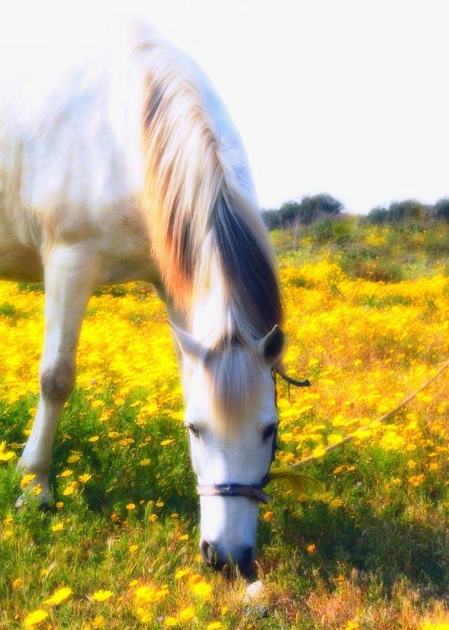 Animal Photograph - Mirage by Stelios Kleanthous