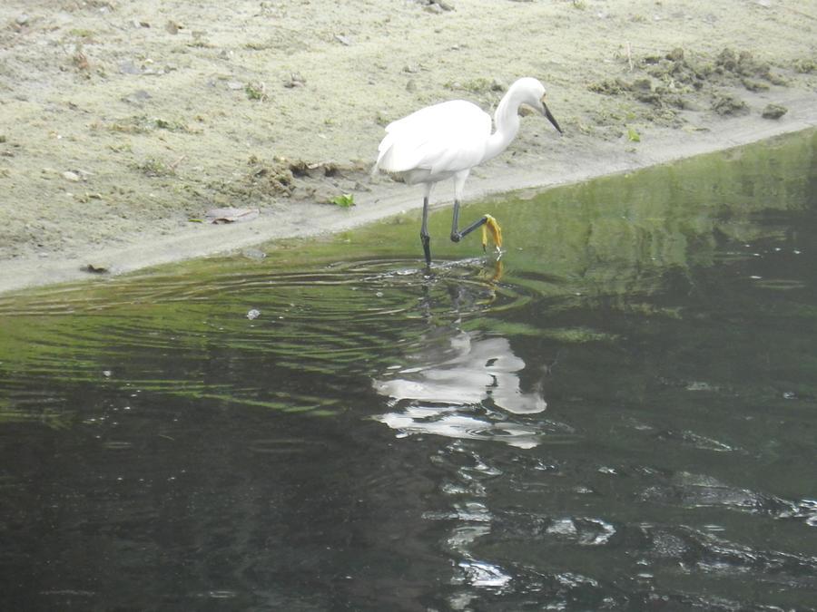 Bird Photograph - Mirror Image by Debra Webb