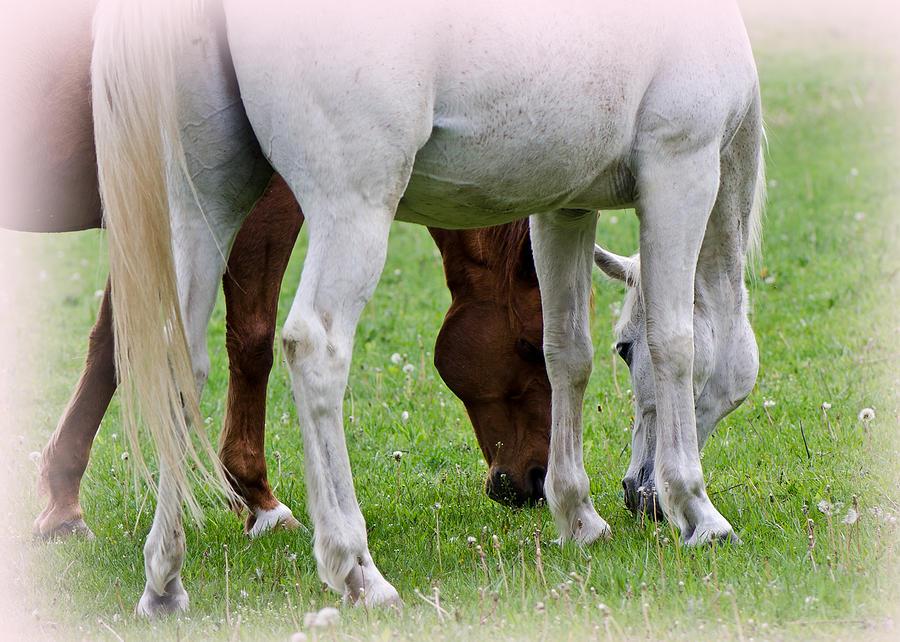 Horses Pyrography - Mirrored by Bobbi Smith