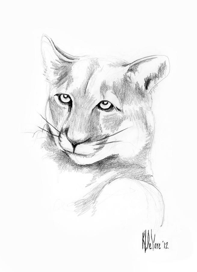 Mountain Lion Drawing - Missouri Mountain Lion  by Kip DeVore
