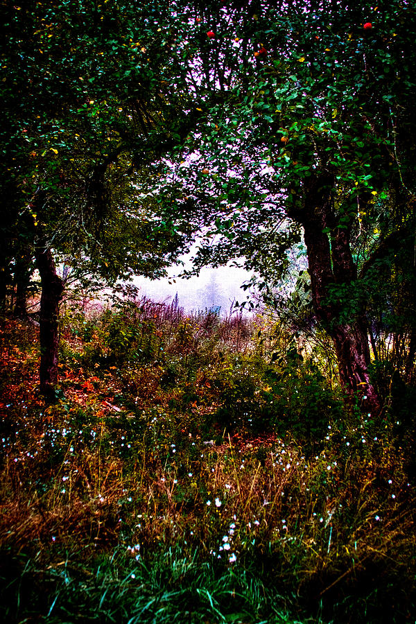 Leaves Photograph - Mist Beyond The Apple Trees by David Patterson