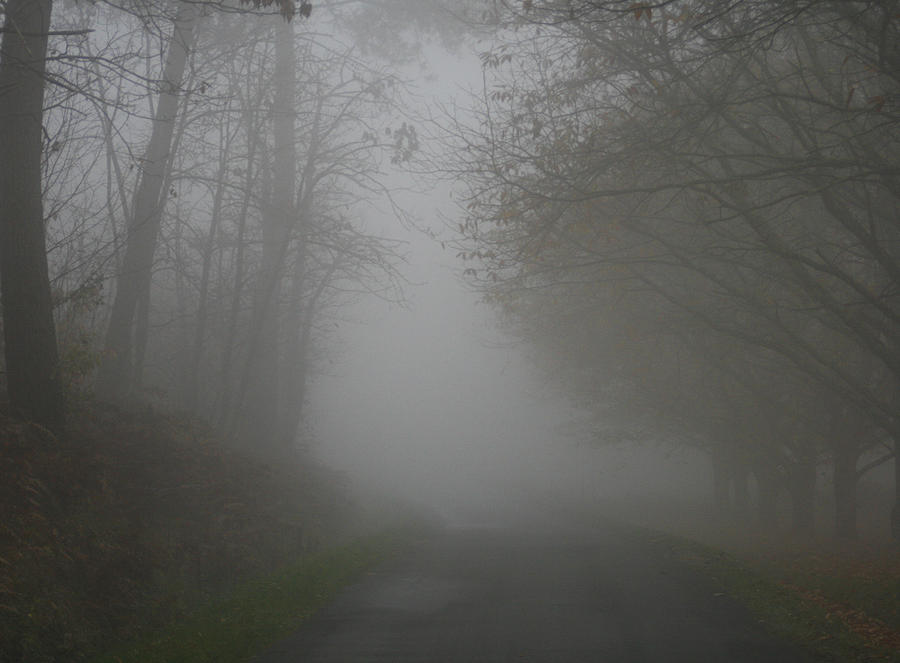 Tree Photograph - Mist Fog And The Road by Georgia Fowler