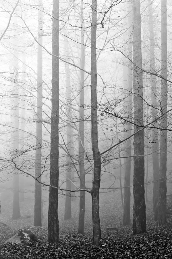 Tree Photograph - Mistery In The Forrest by Filomena Francisco