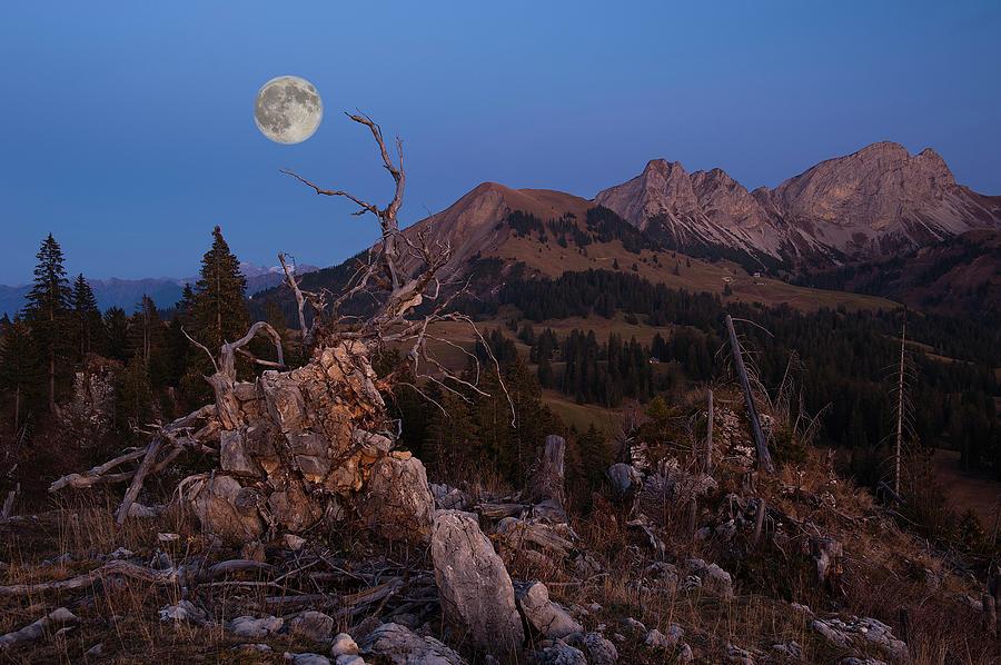 Horizontal Photograph - Mistress Of Night by Ars Silentium