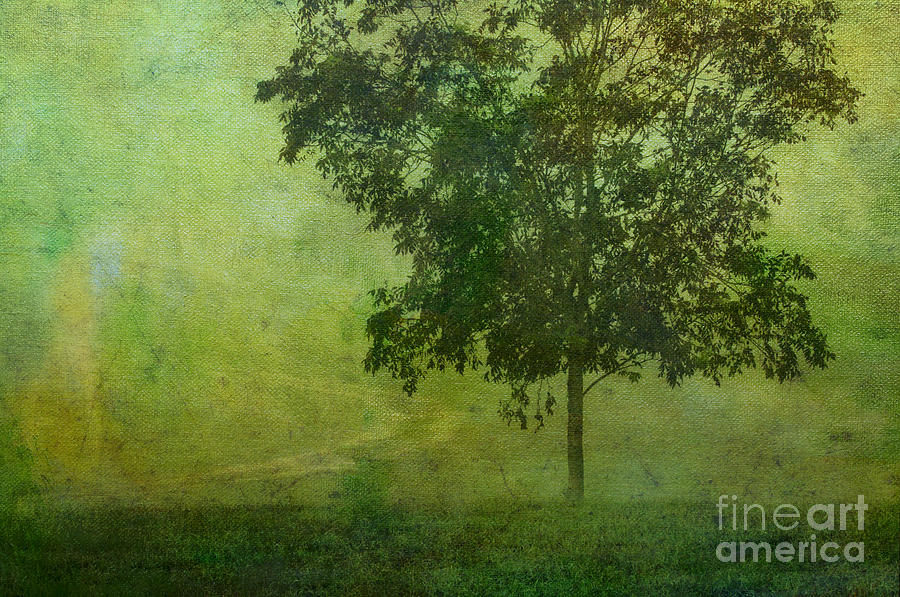 Green Photograph - Misty Country Lane by Judi Bagwell