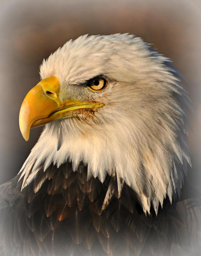 Eagle Photograph - Misty Eagle by Marty Koch