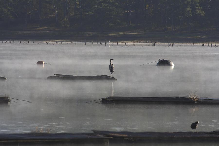 Arkansas Photograph - Misty Morning At Lake Wilhelmina by Douglas Barnard