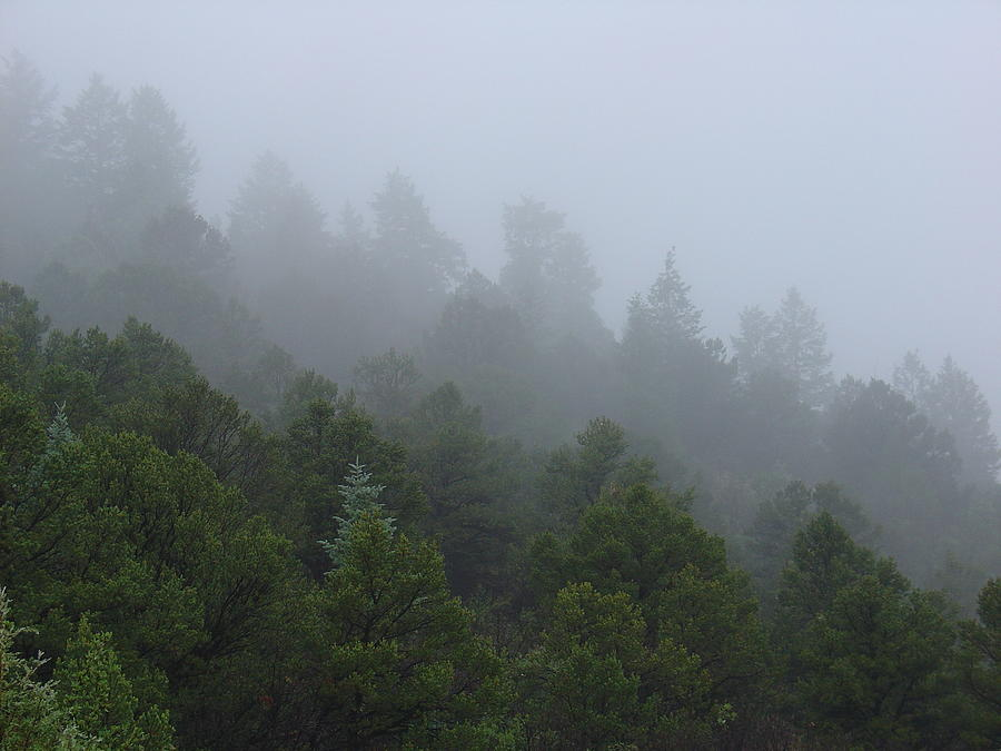 Misty Mountain Morning by Charles and Melisa Morrison