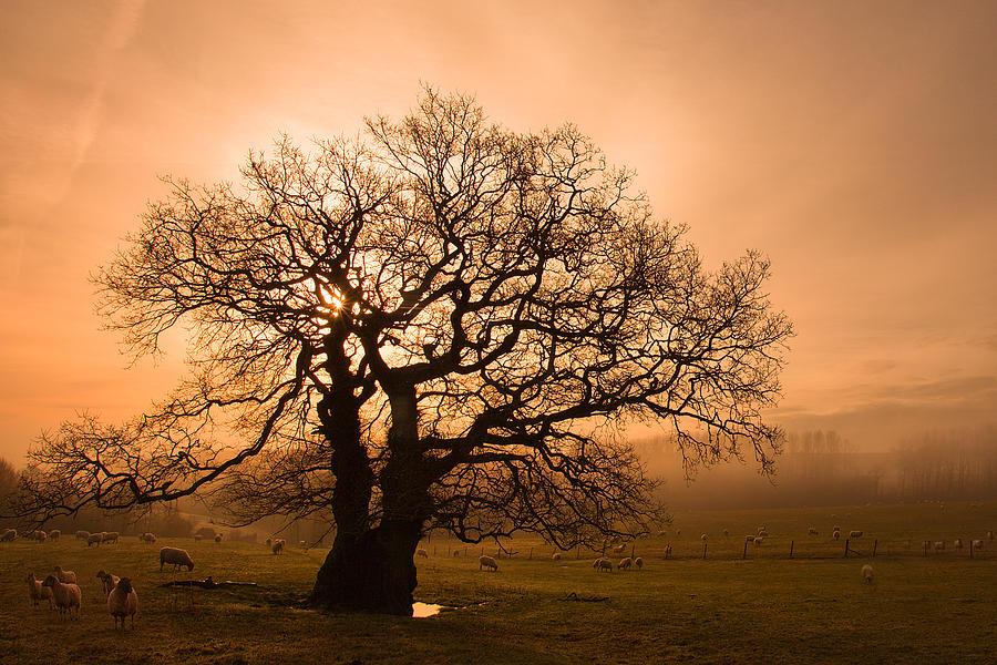 Mist Photograph - Misty Oak by Kris Dutson