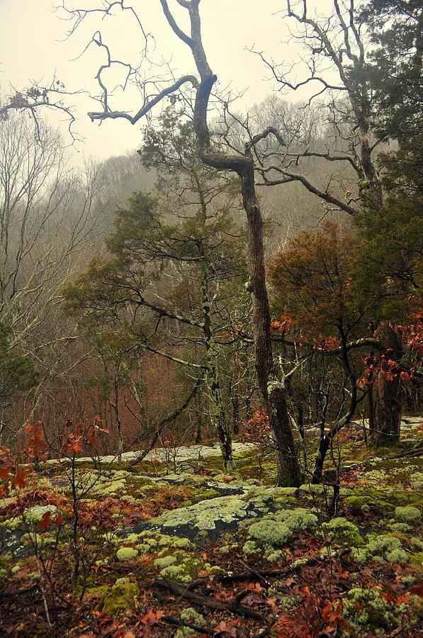 Tree Photograph - Misty Tree by Marty Koch