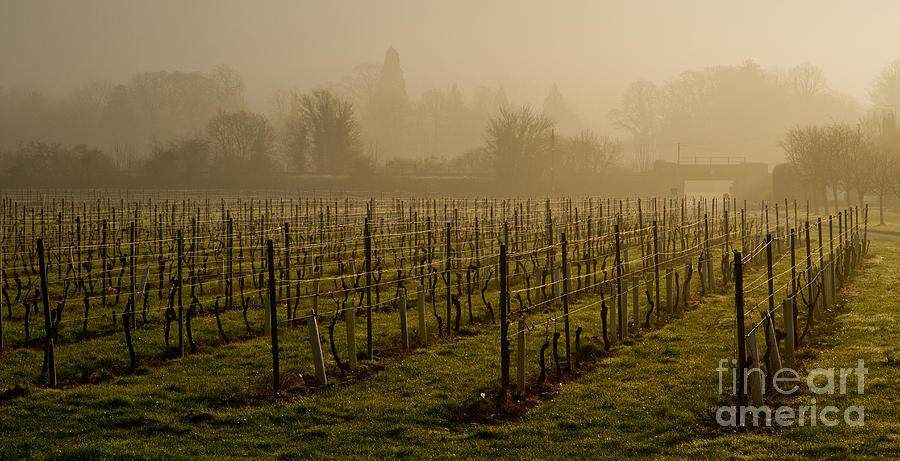 Beautiful Photograph - Misty Vines by Urban Shooters