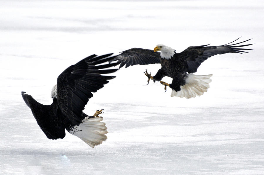 Eagles Photograph - Mitt And Bo by RJ Martens