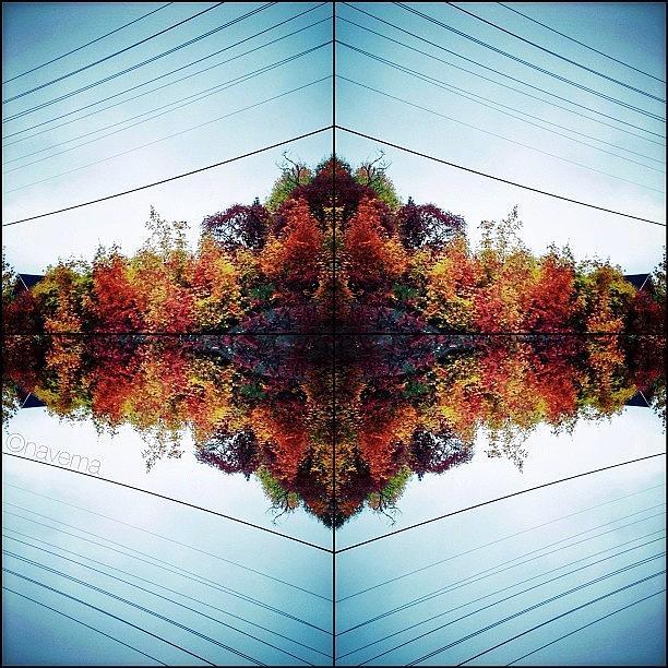 Symmetry Photograph - Modern Muskokan Mandala by Natasha Marco