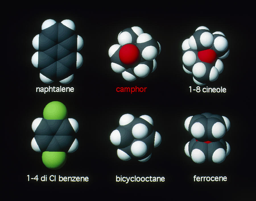 Camphor Photograph - Molecules That Smell Like Camphor by David Parker