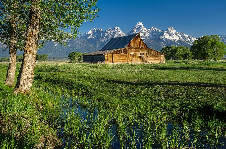 Mormon Row Photograph - Molton Barn And Trees by Greg Nyquist
