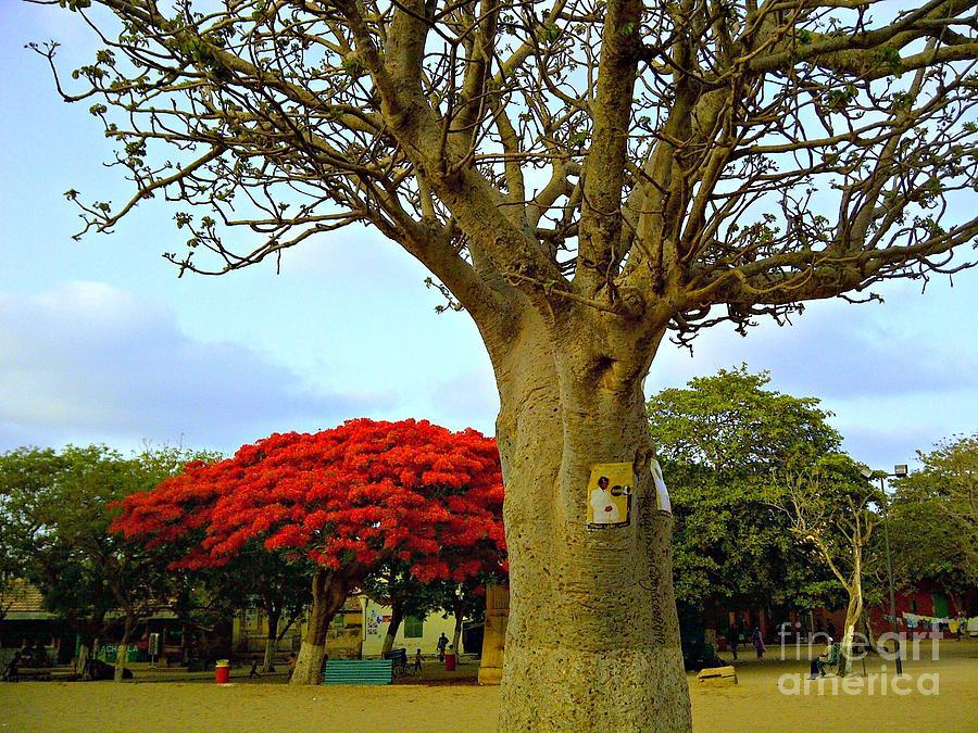Moments And Tree Photograph by Fania Simon